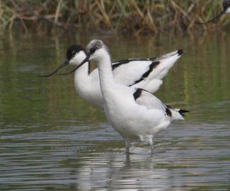 2 beautiful ducks